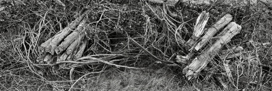 Vaughan, Ontario. Soon-forgotten Remains of Hedgerows and Farm Fencing